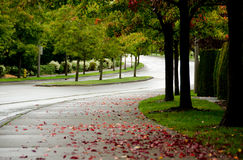 Early autumn in Redmond Royalty Free Stock Photography