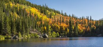 Bear Lake Aspen Hillside Panorama Royalty Free Stock Photography