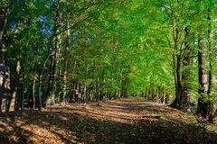 Early autumn scenery showing path between a green leafy forest. During a sunny day Stock Photos