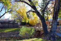Early Autumn, Split Trunk Tree. A split trunk tree near the river in early autumn in Santa Fe Royalty Free Stock Images