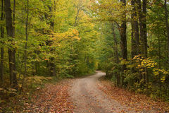 Early Autumn Tree Lined Dirt Road Stock Photography