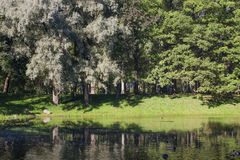 Early autumn trees. With lake and reflections Stock Photography