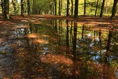 Early autumn with vibrant colored leaves and reflection of trees in a puddle Royalty Free Stock Image