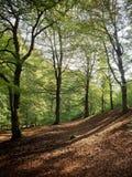 Early autumn, woodland floor Stock Photos