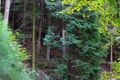 Early autumn woods Stock Photos