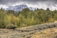 Early autumn Wyoming landscape, aspens royalty free stock image