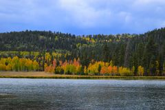 Early autumn. Yellow trees, blue sky and lake landscape. Royalty Free Stock Photo