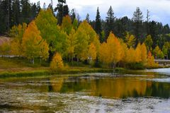 Early autumn yellow trees water reflection. Stock Images