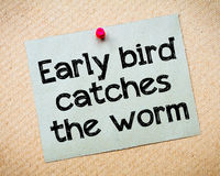 Early bird catches the worm. Message. Recycled paper note pinned on cork board. Concept Image royalty free stock photography