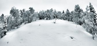 Early cold and misty morning at old hoarfrost beech forest on the mountain, view over frozen grass and boulders to hill. Royalty Free Stock Photos
