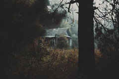 Early dark foggy morning with tree and village house Stock Photography