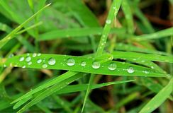 The early droplets in grass Royalty Free Stock Photography
