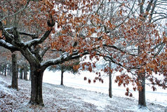An early dusting of snow Royalty Free Stock Photo