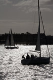 Early Evening Sailing in San Diego Bay Royalty Free Stock Photos