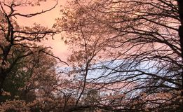 Early evening sky. In western pa royalty free stock image