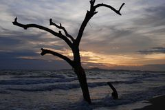 Early evening, tree on the beach, sunset and wavers washing up on the beach. On a warm tropical evening stock image