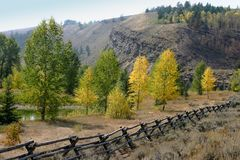 Early fall colors on the trees in Jackson Hole. The first colors of fall by the river in Jackson Hole, Wyoming Stock Photo