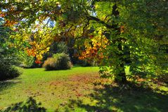 Early Fall Foliage Autumn Tree Stock Photo