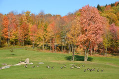 Early fall landscape Royalty Free Stock Photo