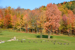 Early fall landscape Royalty Free Stock Photography