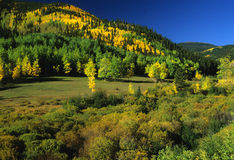 Early Fall in the Rockies. A colorful scenic in the rockies in early fall Royalty Free Stock Photos