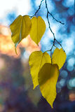 Early fall. Selective focus on leaves in early fall Stock Images