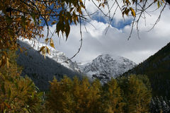 Early fall snow Stock Photo