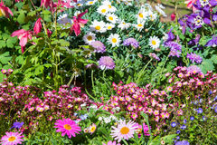 Early flowering plants in a nursey Royalty Free Stock Photo