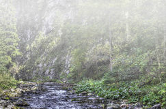 Early fog in the mountain forest. HDR color photo Stock Image