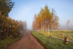 Early foggy morning in the estate Trigorskoye. RUSSIA, PSKOV REGION, TRIGORSKOYE - OCTOBER 5: Early foggy morning in the estate Trigorskoye, Pushkinskiye Stock Photos