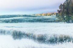 Early foggy morning on the shore of the lake mirror. Frost on the grass near the water stock photos