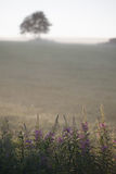 Early, foggy, summer morning in the field Royalty Free Stock Photos