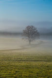 Early fogy autumn morning on the Czech Austrian border Royalty Free Stock Photography