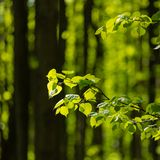 Early foliage in the wood. Against the background of trees trunks Royalty Free Stock Photography
