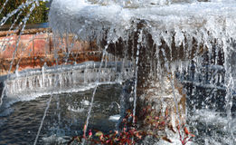 Early freeze. In Charlotte Nc royalty free stock photo