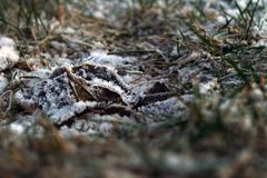Early frosts in city Royalty Free Stock Photography