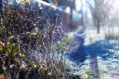 Early frosts. Macro photo of plants covered by ice crystals at cold autumn morning. Early frosts. Macro photo of plants covered by ice crystals at cold autumn Royalty Free Stock Photo