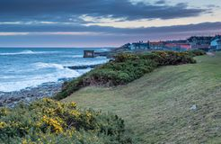 Early Gorse at Craster Village Royalty Free Stock Photos