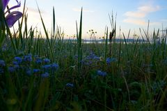 5 minutes before sunrise. In early June, the steppe is covered with blooming flowers, before the sunrise strong dew fell on the flowers and grass royalty free stock photo