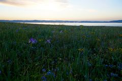 5 minutes before sunrise. In early June, the steppe is covered with blooming flowers, before the sunrise strong dew fell on the flowers and grass stock photography