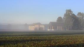 Early misty morning landscape in PolandMisty landscape with trees and meadow in Poland. Misty landscape with trees and meadow under blue sky on Podlasie in stock video footage