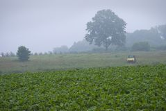 Early Morninf Farm Royalty Free Stock Images