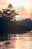 Early morning in Amazonian rainforest. Lake Cuyabeno Stock Image