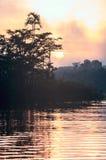 Early morning in Amazonian rainforest. Lake Cuyabeno Stock Image