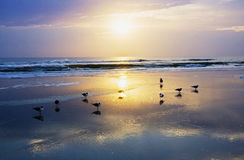 Early morning at Atlantic ocean beach Royalty Free Stock Photo
