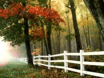 Early Morning, Autumn, Fall, Forest Stock Photo