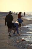 Early morning avid shell hunters stock photography
