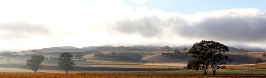 Early morning in the Barossa Valley Royalty Free Stock Image