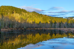 Early Morning Beaver Pond Royalty Free Stock Photos