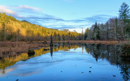 Early Morning Beaver Pond Stock Photography